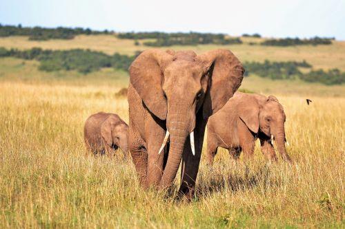animals elephant elephants