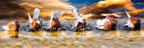 animals water bird