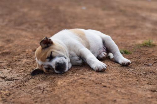 animals dog sleep