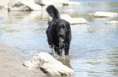 animals dog wildlife photography