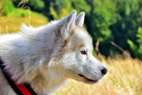 animals dog spacer