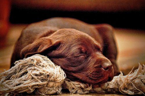 animals dogs puppies