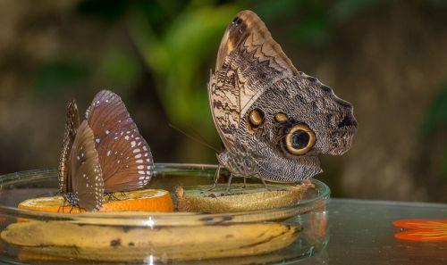 animals nature butterflies