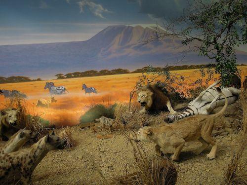 animals models exhibit