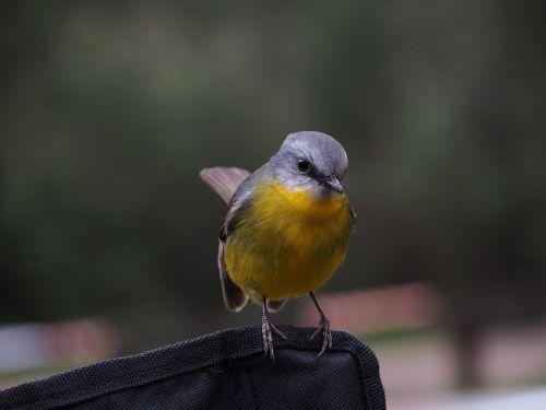 animals birds perched