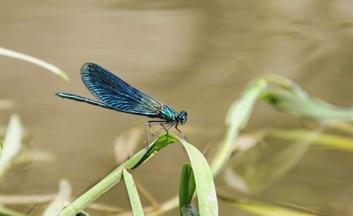 animals insects dragonfly