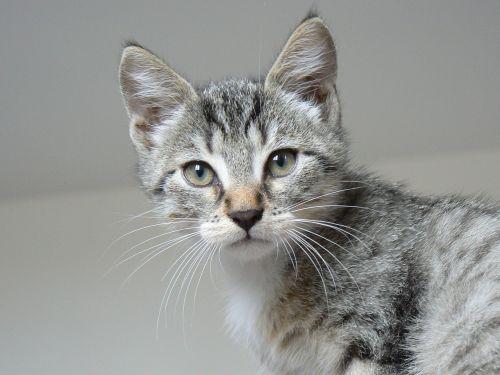 animals kitten cat