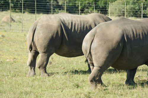 animals south africa rhino