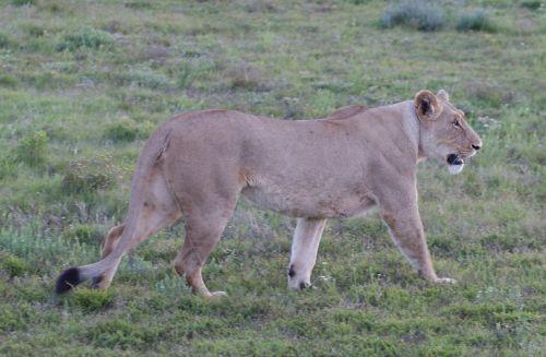 animals south africa wild animals