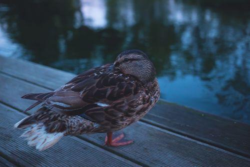 animals beak bird