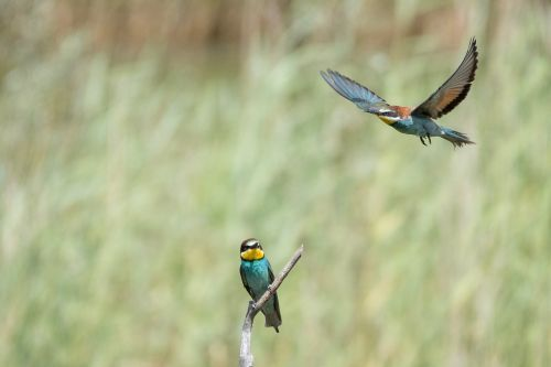 animals birds biotope
