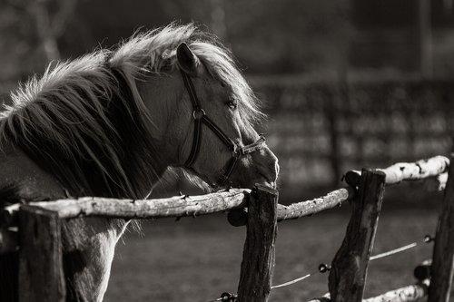 animals  horse  kaltblut