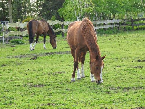 animals  pasture land  farm