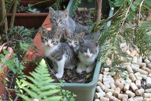 animals  kittens  scope