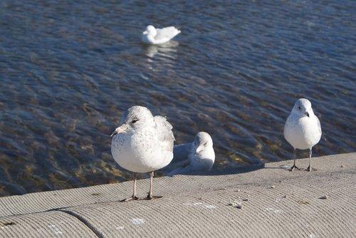 animals  seagull  beach