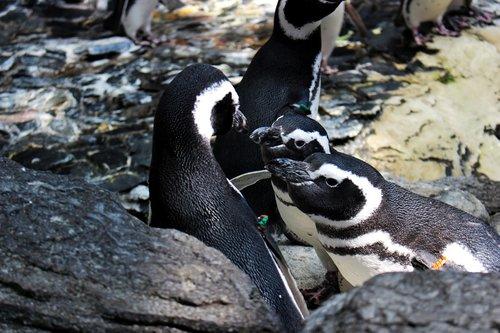 animals  penguin  bird