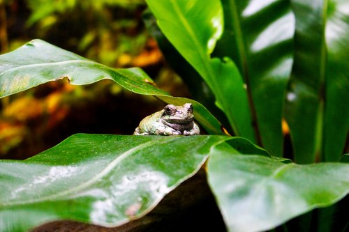 animals  frog  toad