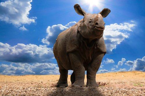 animals  nature  rhino