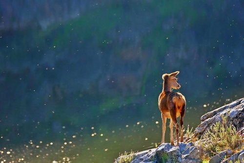 animals  wildlife  nature