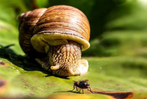 animals  snail  mollusk