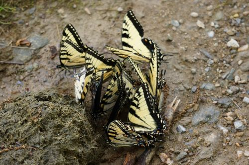 animals insects butterflies