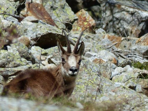 animals nature fauna