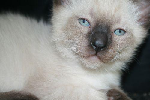 animals cat cute