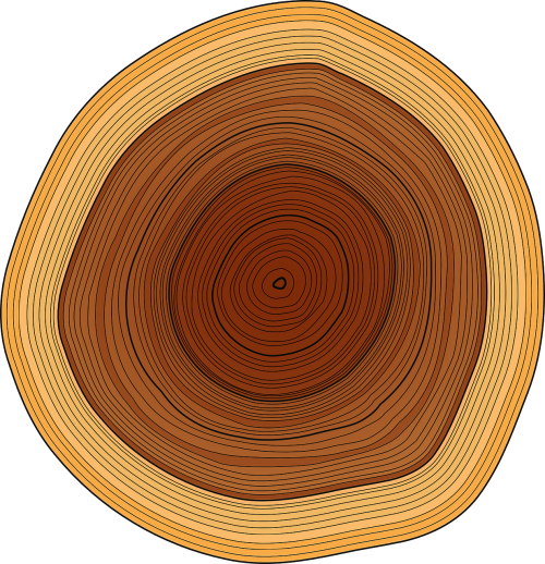 annual rings trunk tree