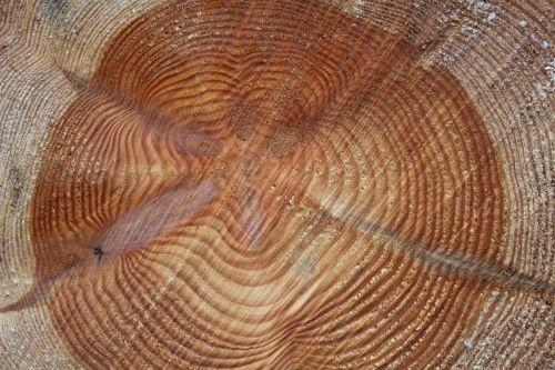 annual rings tree wood