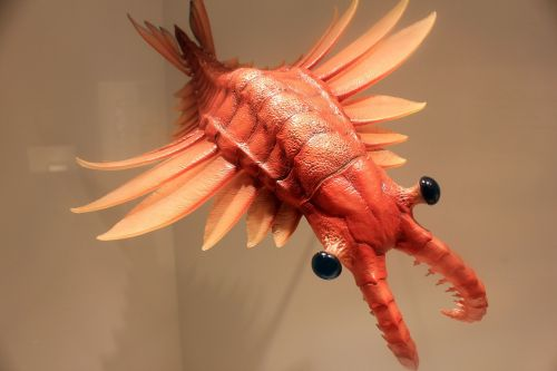 anomalocaris prehistoric animals