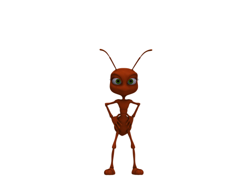 ant insect red ant
