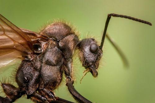 ant macro animal