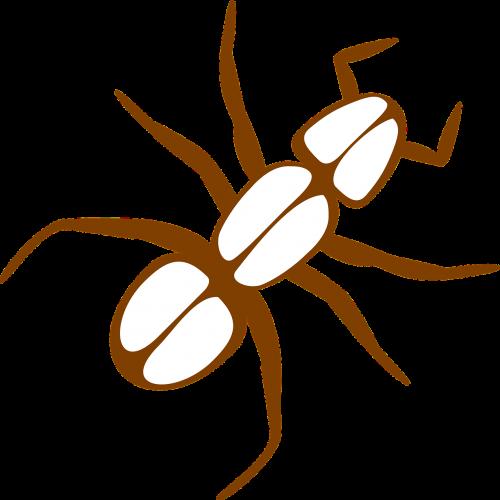 ant legs antennas