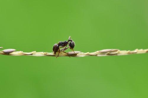 ant  karınca  macro
