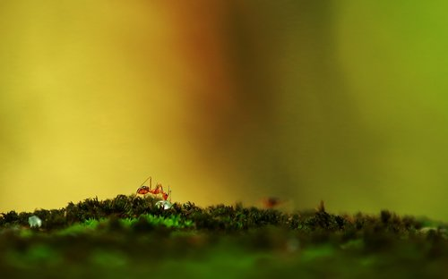 ant  nature  ants world