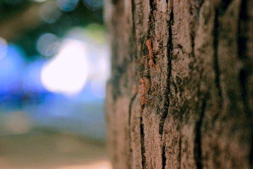 ant  nature  woods