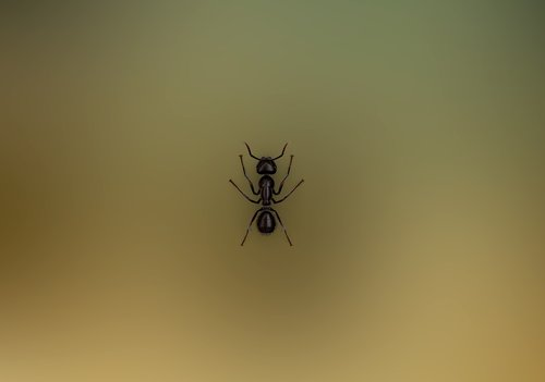 ant  insect  nature