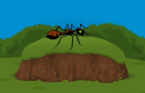 ant  insect  grass