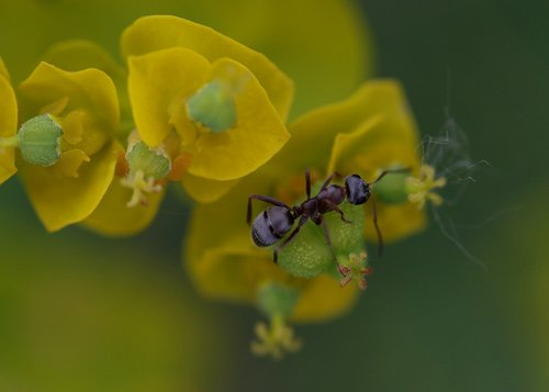 ant  insecta  plant