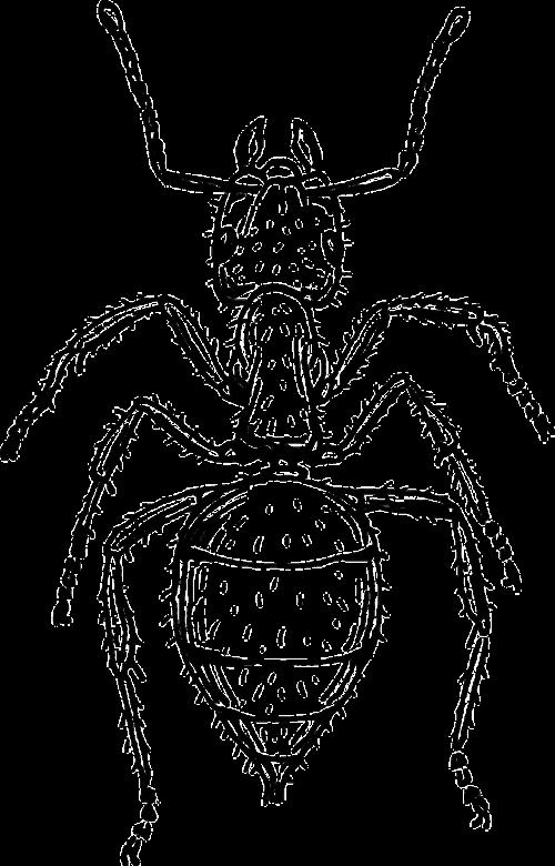 ant body segmented