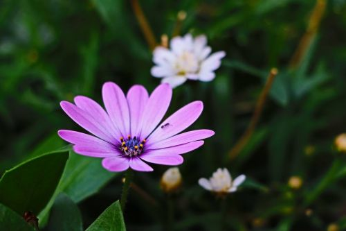 ant flowers spring