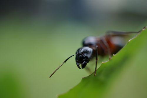 ant probe head