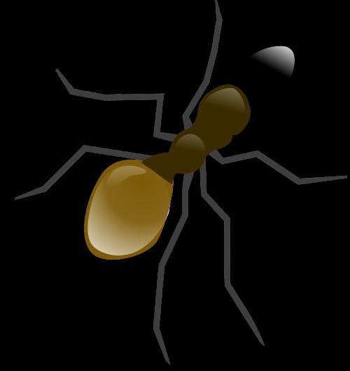 ant wood ant animal