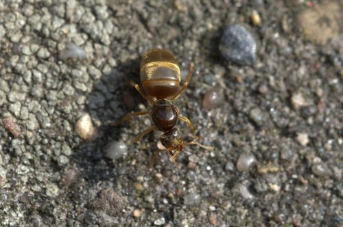 ant queen ant insect