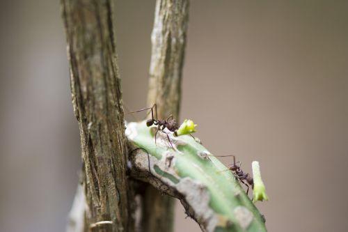 ant street macro ant
