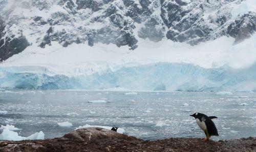 antarctica penguins icebergs