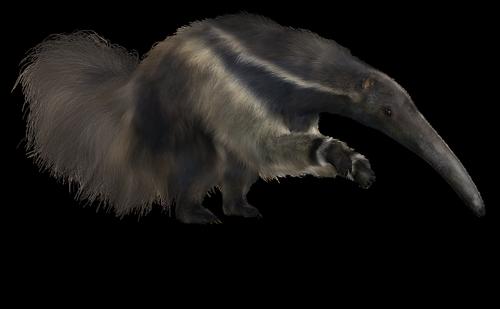 anteater  giant  animal