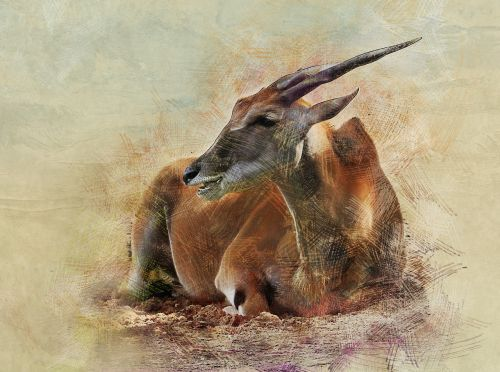 antelope animal ovis
