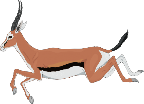 antelope running leaping