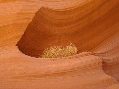 antelope canyon arizona antelope